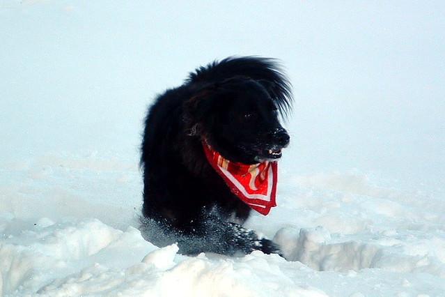 True snow dog