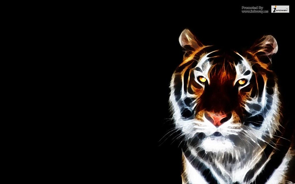 Black Tiger Hd Wallpaper Widescreen A Photo On Flickriver