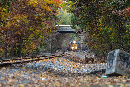 railroad autumn trees ny newyork fall nature colors animal train landscape graffiti charlotte wildlife scenic tracks rail rr headlights deer antlers foliage greece locomotive buck nys rochesterny csx monroecounty lakeave dandangler
