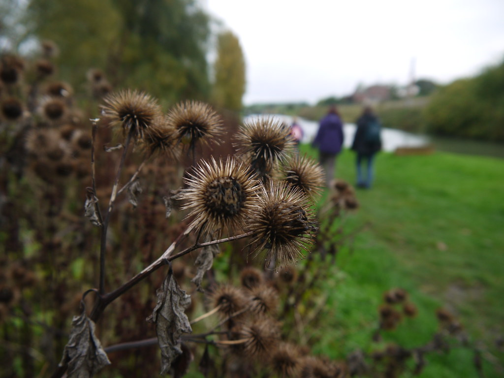 Autumn Burrs | A bur (also spelled burr) is a seed or dry fr… | Flickr