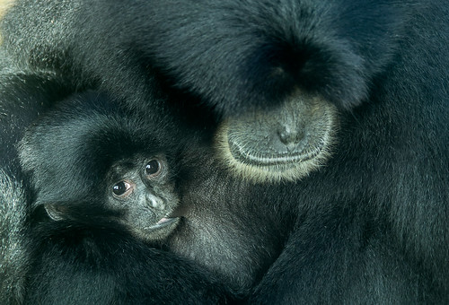 Mother and Baby // 22 11 13 | by Manadh
