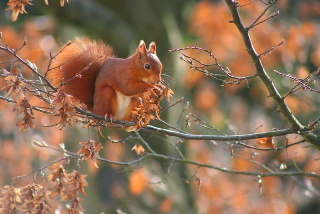 L'automne arrive.../ The autumn comes ...