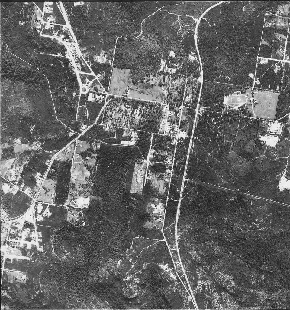 Belrose, Frenchs Forest & Forestville 1951 - Sydney aerial photo