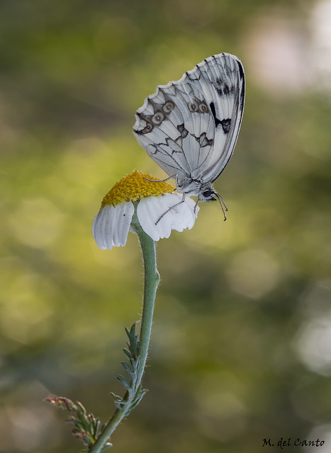 Floral Butterfly airport