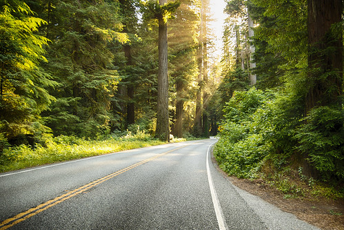 statepark sunset green tarmac northerncalifornia coast redwoods roads sweepingcurves