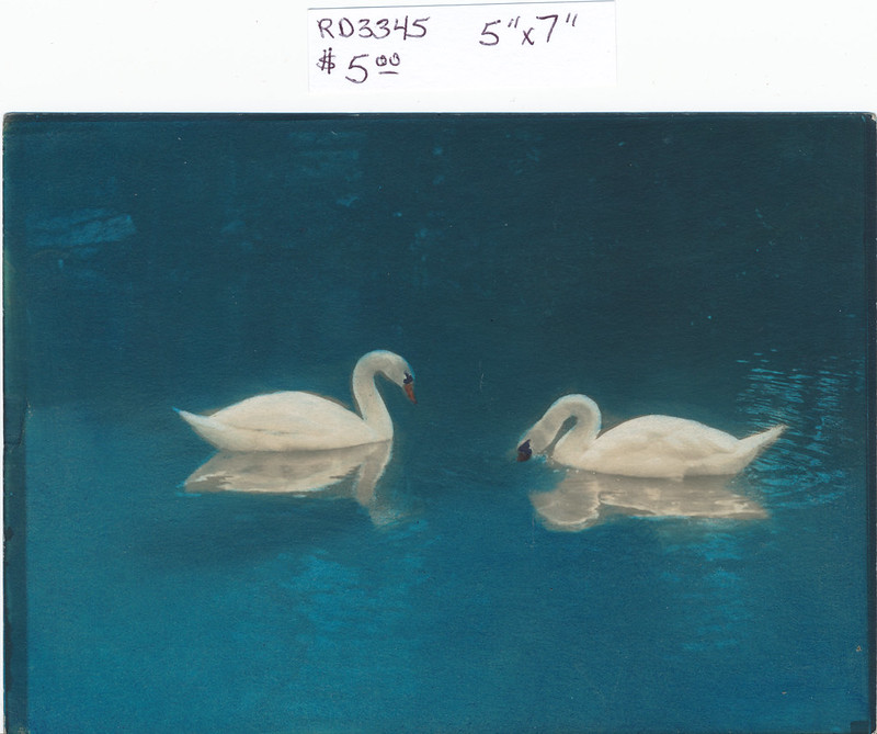 RD3345 Two Swans on the Water Print