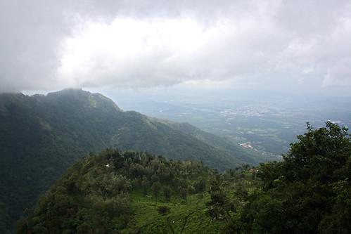 landscape tea coonoor