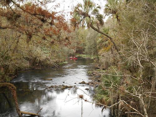 scenic canoe hillsboroughriverstatepark hillsboroughriver