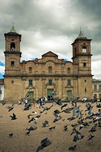 Pigeon Congregation