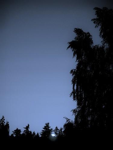 sunset bw monochrome settingsun silhouetteoftrees moodysunset sunsetinbw lastofthesettingsun lastofthesettingsuninbw settingsuninbw