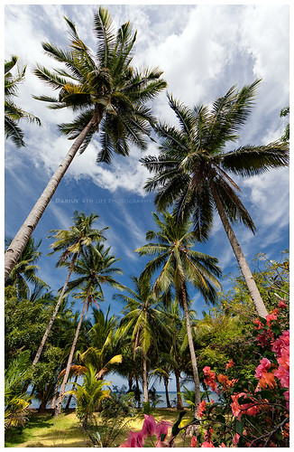 flowers blue red sea sky sunlight holiday green beach nature water colors beautiful sunshine garden indonesia landscape thailand asia paradise philippines dream palmtrees malaysia tropical vegetation romantic tropic vacations busuanga