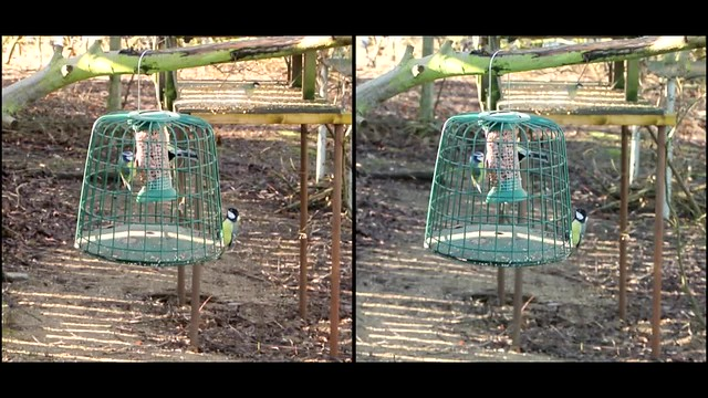 blue tits in feeder cage - 3d movie clip - crossview