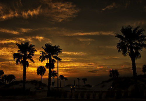 trees sunset sky clouds mexico golden gulf silhouettes palm clearwater beaxh pentaxk5
