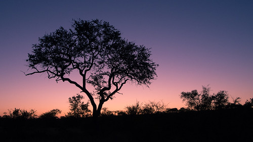 africa sunset southafrica south clear greater kruger pondoro balule