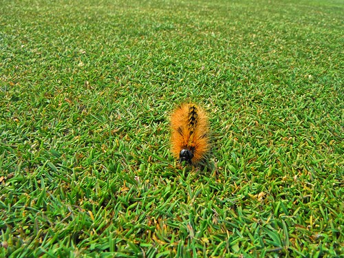 orange green oregon golf florence sand fuzzy dunes caterpillar golfcourse wife oregoncoast links hdr sanddunes florenceoregon gaylene oceandunes easyhdr puttingsurface oceandunesgolflinks