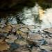Still water on South Boulder Creek, near the South Mesa Trailhead.