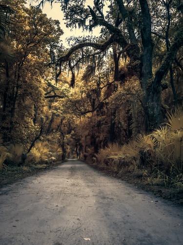 centralflorida falsecolor flaglerbeach florida ir infrared landscape moss oak palm road tree usa bulowplantationruins edrosackcom