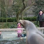 Girl watching sea lion