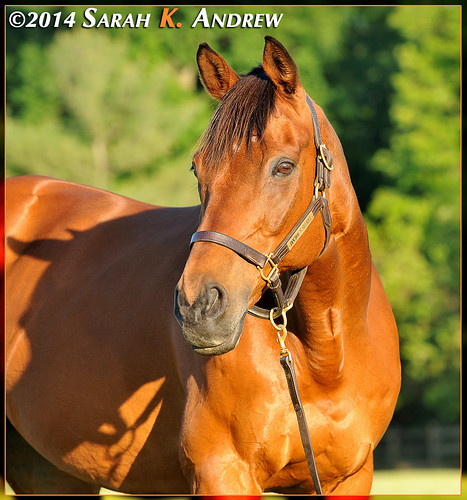 Wizard's annual conformation photos: age 18 | by Rock and Racehorses