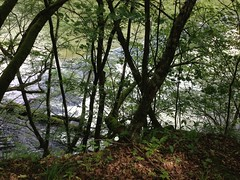 Taman Nasional Podyjí