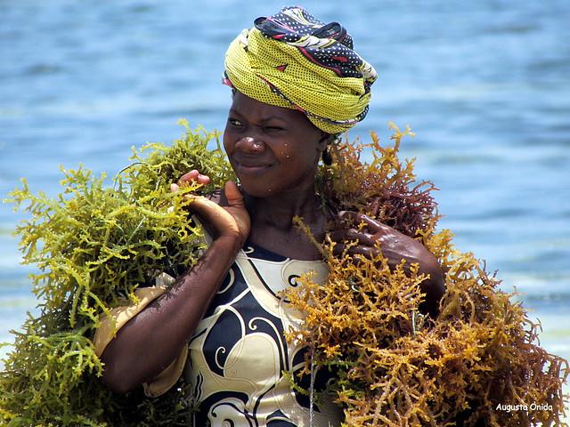 La raccoglitrice di alghe...The picker algae.