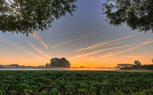 field fog sunrise day nebel pentax feld matthias sonnenaufgang kale hdr k5 körner sigma1020 grünkohl mattkoerner1
