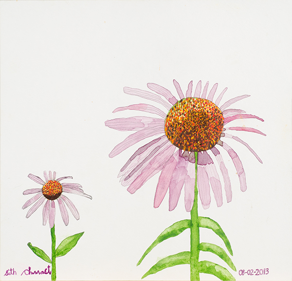 Echinacea (12 x 12.25 watercolor on paper)