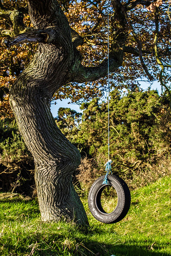artistic countryside outdoors open air photography cwhatphotos angle view photographs photograph pic pics photo photos images foto fotos that have which contain with canon 7d eos dslr tree swing tyre tyreswing oldtyre prime lens 60mm 28 f28 sacriston nearsacriston near flickr