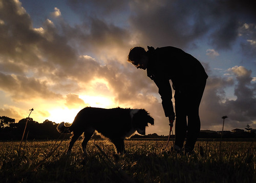 iphone dog sunset pets silhouette