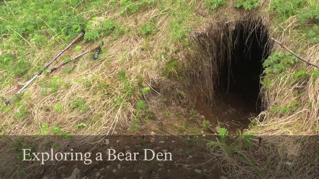 Exploring a Bear Den