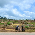 Deforestation in Cross River state, Nigeria