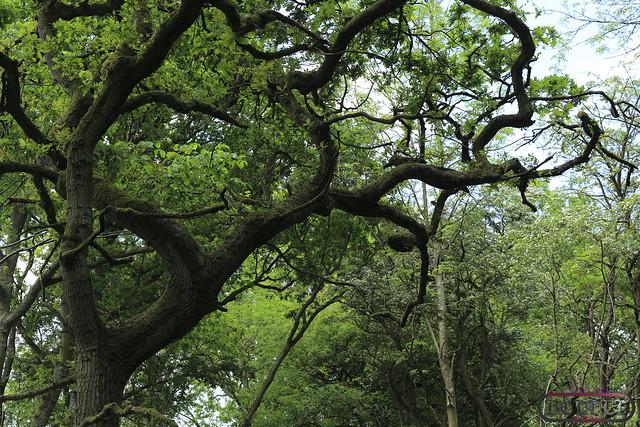 Bannams Wood 18th May 2014