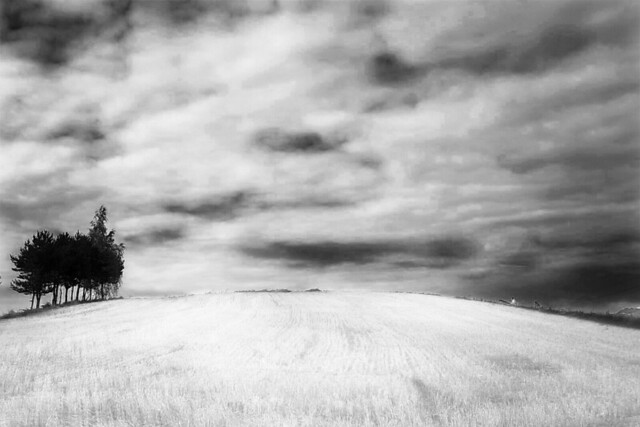 provincial notes/ the land CX