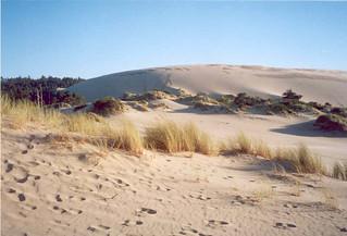 42 Oregon Dunes National Recreation Area