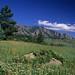 Spring near the South Mesa trailhead.