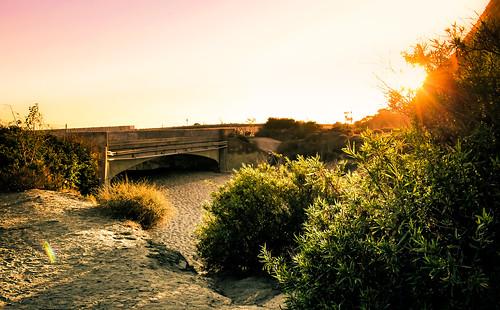 california bridge sunset red plants sun grass yellow sunrise point bridges rays mugu