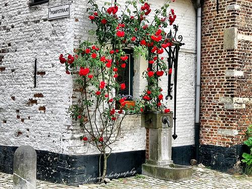 houses belgium cobblestones lier cottages beguinage spinsters beguines streetlets