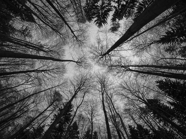 Trees (Fisheye)