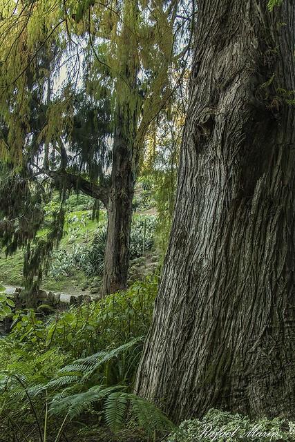 Montserrate Garden