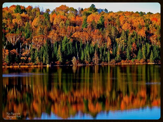 Lake Opeongo Algonquin P. Park Ontario /  Canada