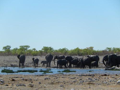 Etosha NP - olifantenkudde drinkt