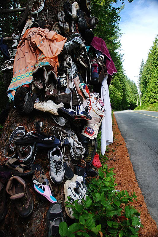 Shoe Tree on Great Central Lake Road north of Port Alberni, Vancouver Island, British Columbia