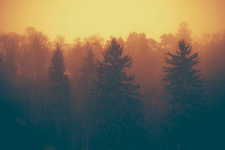 Trees in the fog | by mmartinsson