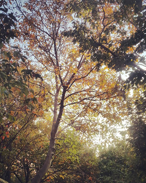 #پاییز #کن #تهران   #THR #Tehran #Iran #mustseeiran #everydayiran #hamgardi #discoveriran #Nature by #Note4