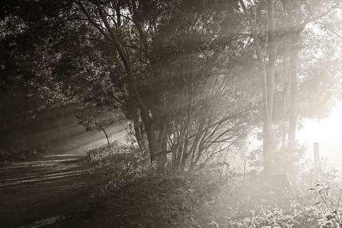 landscape oxleycreekcommon sunrays raysofsun sun morningsun fog morning trees sepia bw monochrome