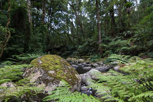 heritage nature water ecology rainforest australia nsw aus unescoworldheritage worldheritage borderrangesnationalpark canon40d borderrangesnp tokina1116f28atxprodx