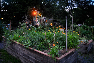 Raised Garden Beds at the Minton Stable Community Garden | by Sarah&Boston