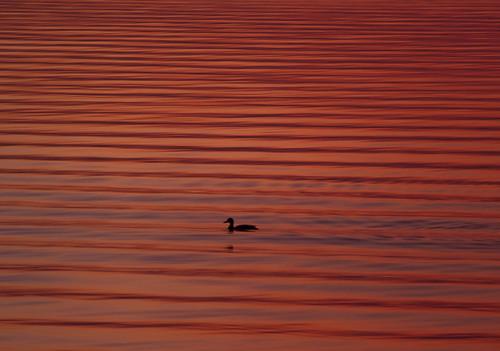light lake ontario canada water sunrise reflections morninglight duck waves patterns ripples lakeontario mississauga portcredit flickraward mygearandme ringexcellence