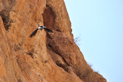 nature birds israel oasis oiseau einperat
