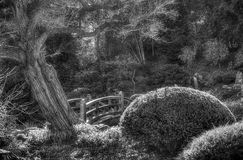hakonegardens japanesegarden garden saratoga california trees bushes bridge woodbridge hdr 3xp raw nex6 sel50f18 photomatix monochrome bw fav50 siliconvalley sanfranciscobay